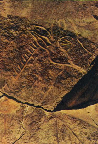 43 голова жирафы фрагмент петроглиф