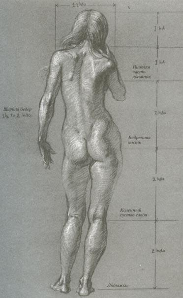Женская фигура фото вид сзади фото 803-424