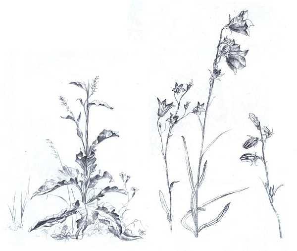 И зарисовки растений наброски и